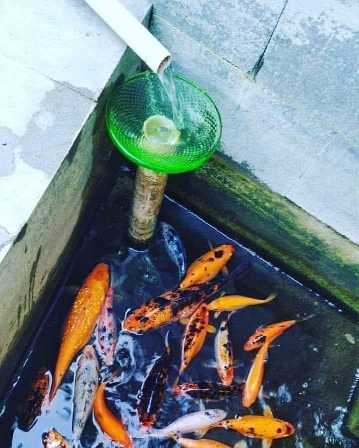Airnya di Alirin BioGlass